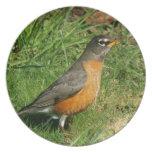 Placa del pájaro del petirrojo plato de cena