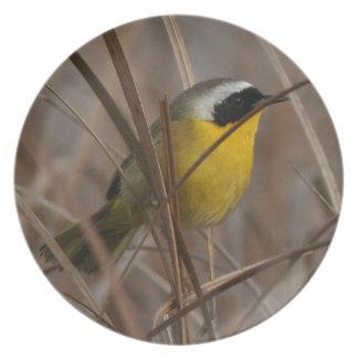 Placa del pájaro del Yellowthroat Plato