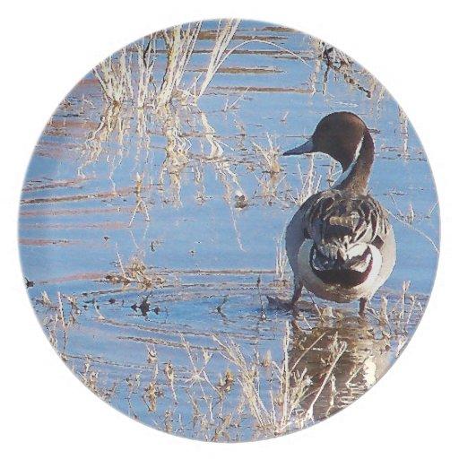 Placa del pato del pato rojizo plato para fiesta