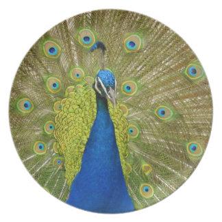 Placa del pavo real plato de cena
