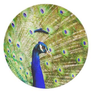 Placa del pavo real plato