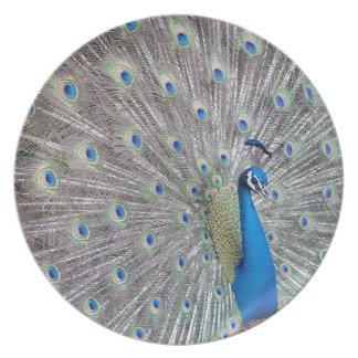 Placa del pavo real platos para fiestas
