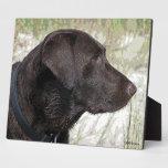 Placa del perfil de Labrador del chocolate
