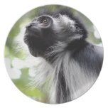 Placa del perfil del mono de Colobus Plato De Comida