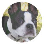 Placa del perrito de Boston Terrier Platos