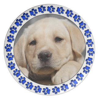 Placa del perrito del laboratorio plato para fiesta