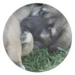 Placa del perrito del pastor alemán plato para fiesta