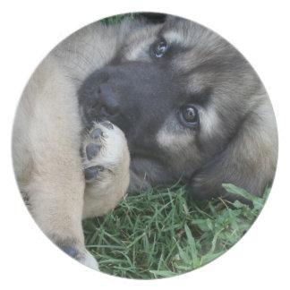 Placa del perrito del pastor alemán platos para fiestas