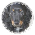 Placa del perro de perrito de Daschund Platos
