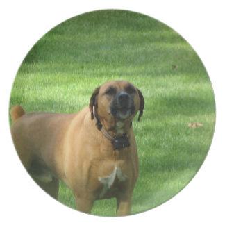 Placa del perro del boxeador del descortezamiento plato de comida