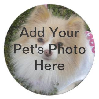 Placa del perro plato para fiesta