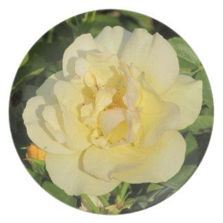 Placa del rosa amarillo de Oregold Plato