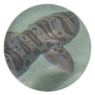 Placa del tiburón de tigre plato de cena