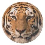 Placa del tigre plato de comida