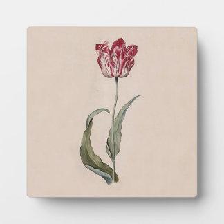 Placa del tulipán de Judith Leyster