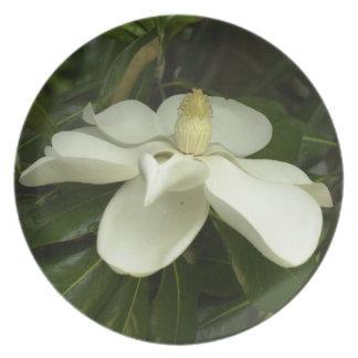 Placa dulce de la magnolia platos para fiestas