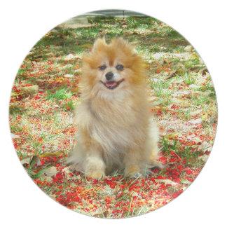 Placa el   Pomeranian sonriente con las flores roj Platos