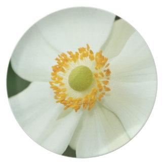 """Placa especial de la """"anémona blanca"""" plato de comida"""