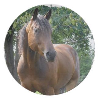 Placa excelente del caballo de la bahía plato de comida