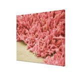 Placa-formación de bacterias, exploración coloread impresión en lona estirada