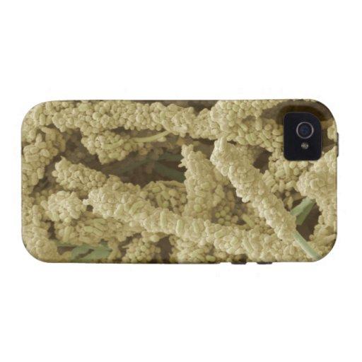 Placa-formación de las bacterias, coloreadas explo vibe iPhone 4 funda