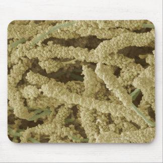 Placa-formación de las bacterias, coloreadas tapete de ratones