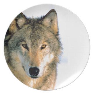 Placa fotográfica del lobo hermoso plato de cena