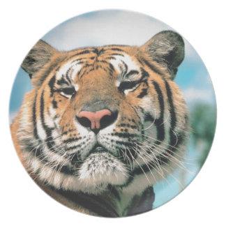 Placa fotográfica del tigre hermoso plato para fiesta
