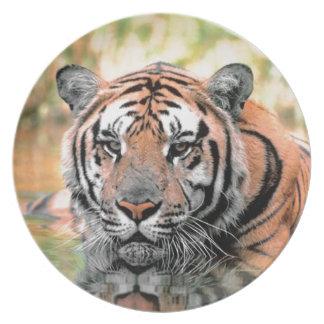 Placa fotográfica del tigre hermoso platos de comidas