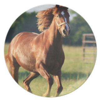 Placa galopante del caballo de la castaña platos de comidas