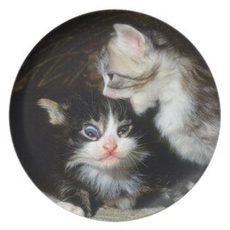 placa - gatitos del coon de Maine Plato Para Fiesta