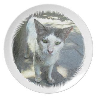 Placa gris fresca de los oídos de los ojos verdes  plato