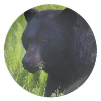 Placa hambrienta del oso negro platos de comidas