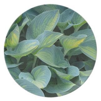 Placa hermosa de la planta del hosta platos para fiestas