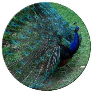 Placa india magnífica de Paon del Peafowl del pavo Plato De Porcelana