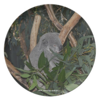 Placa - koala platos