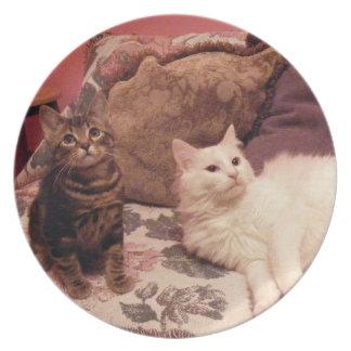 placa linda de los individuos (dos gatos) plato para fiesta