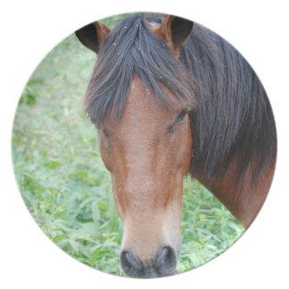 Placa linda del caballo de Paso Fino Platos