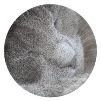Placa linda del gatito el dormir plato de cena