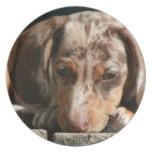 Placa linda del perrito de Daschund Plato Para Fiesta