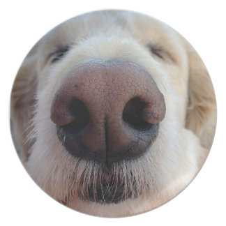 Placa linda del perro platos para fiestas