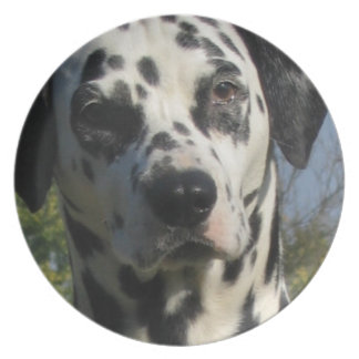Placa manchada de Dalmation Platos De Comidas