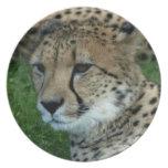 Placa manchada del guepardo plato para fiesta