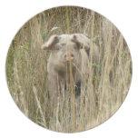 Placa manchada linda del cerdo platos