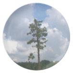 Placa minúscula del árbol plato de cena
