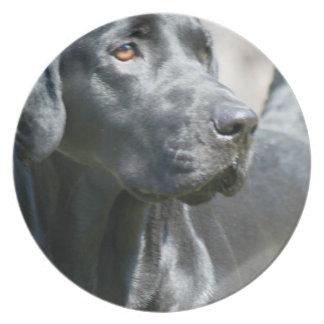 Placa negra alerta del perro del labrador retrieve plato de comida