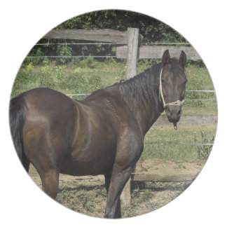 Placa oscura del caballo de bahía plato de comida