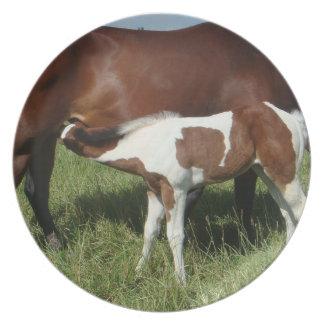 Placa - pinte el potro del caballo plato