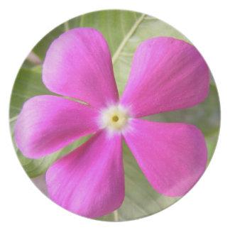 Placa púrpura exótica de la flor plato para fiesta