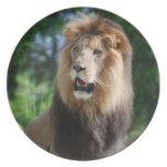 Placa real del león plato de comida